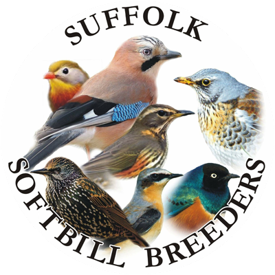 100% SOFTBILLS - All Variety Softbill Bird Sale and Show